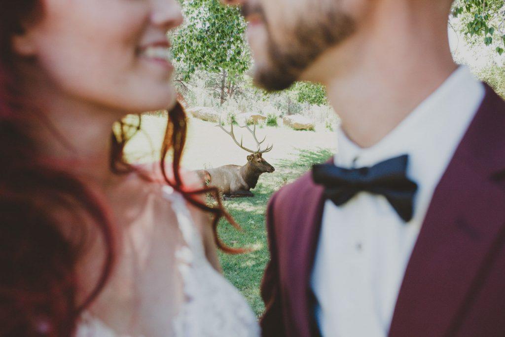 Wedding portraits at Black Canyon Inn with Elk in Estes Park