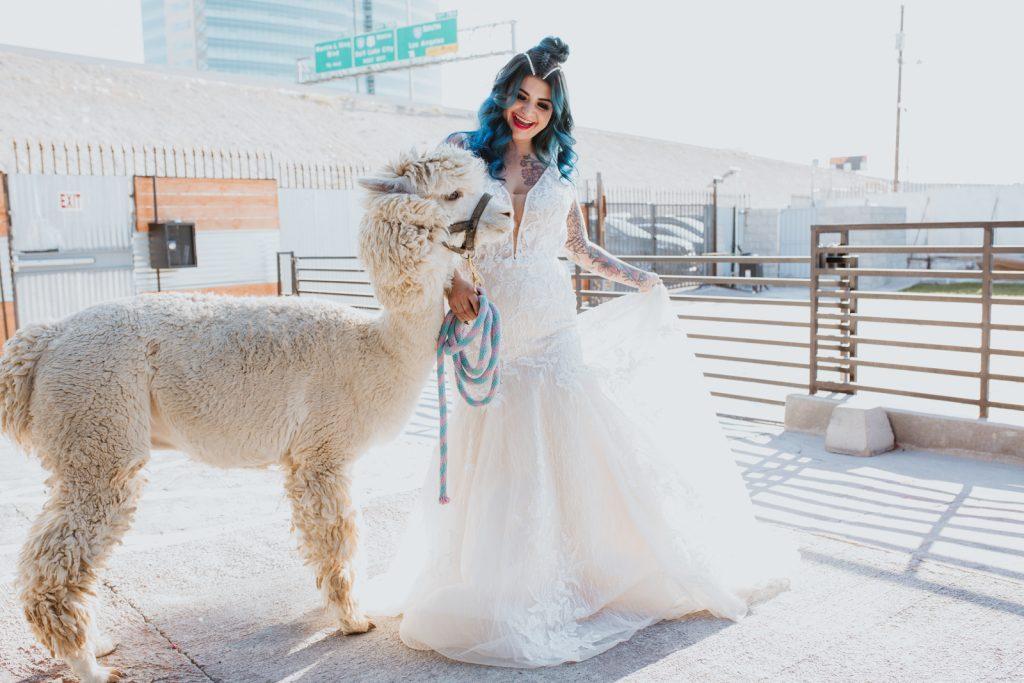 Las Vegas wedding photo of a bride with Alpaca