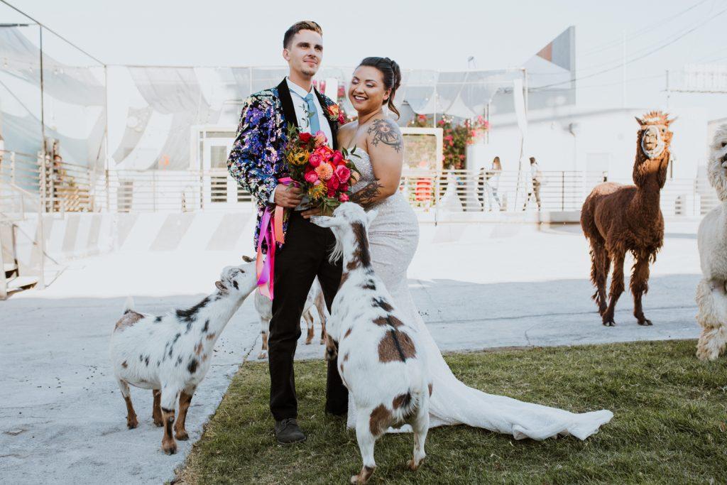 Las Vegas Wedding Portraits with goats
