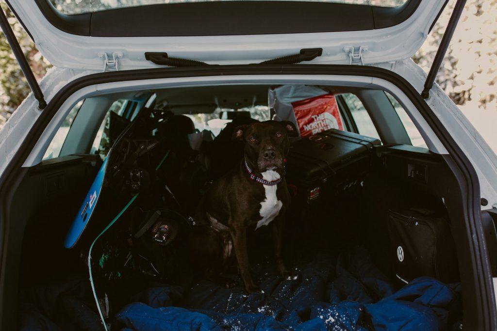 Black Dog in Breckenridge Colorado